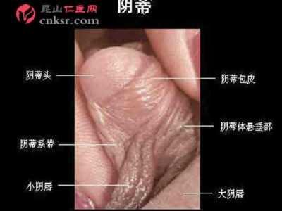 大阴蒂 成熟女性阴蒂勃起时的阴核实图照片