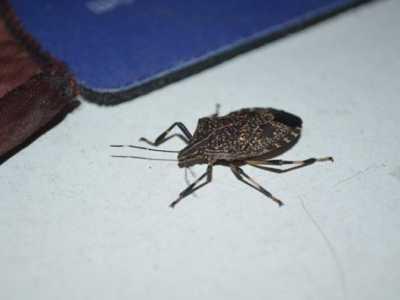 恶心虫子图片 这十种虫子看了让人想吐