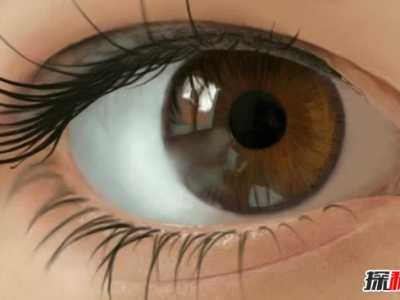 什么对眼睛好 保护眼睛的十大食物